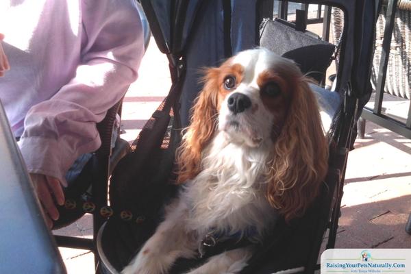 Dog-Friendly-Fredericksburg, VA Restaurants - Castiglias