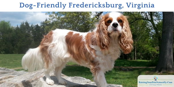 Dog-Friendly Fredericksburg, Virginia. Check out the great dog-friendly attractions, restaurant and hotel during our trip.