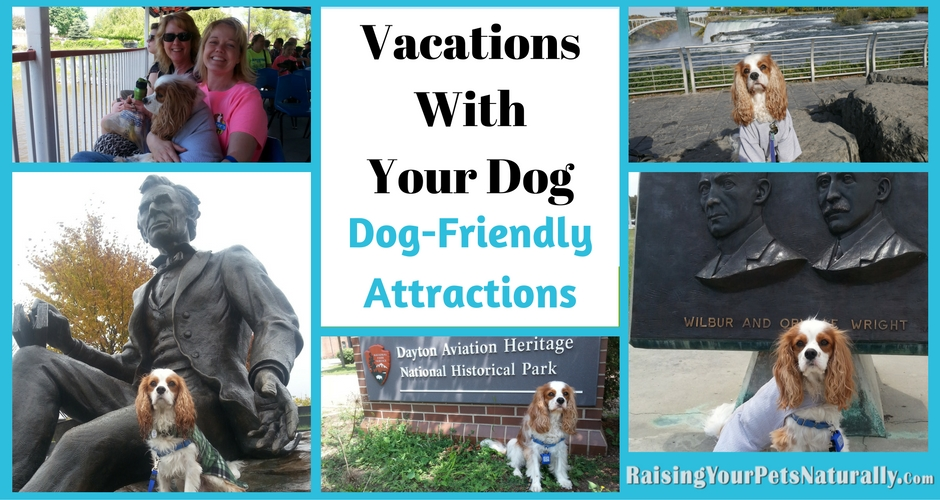 Dog-friendly vacations and traveling with your dog has never been so much fun. Bring your dog and enjoy some of these dog-friendly destinations and tourist spots. #raisingyourpetsnaturally