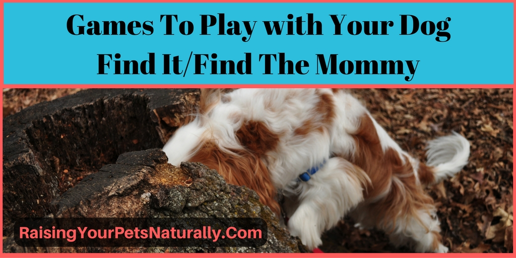 Learn fun and easy games to play with your dog. Find it, find the person.