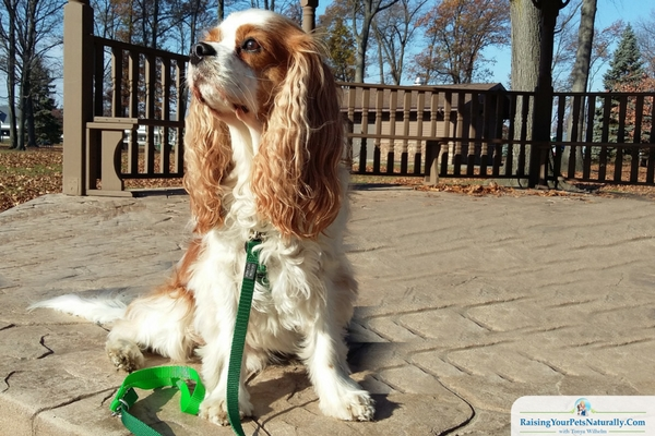 How to Teach Your Dog to Walk on a Leash and to Stop Dog From Pulling on Leash