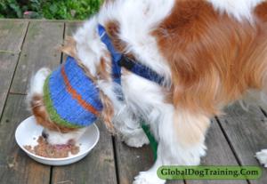 Healthy dog food reviews
