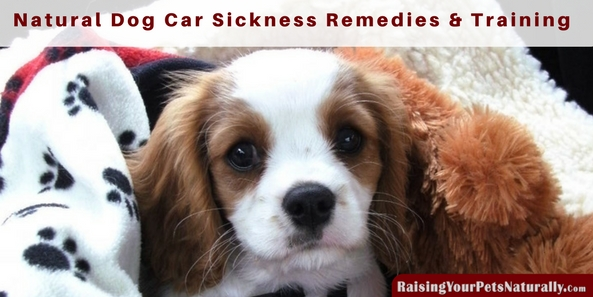 Dog Car Sickness: Natural Dog Car Sickness Remedies|How to Prevent Dog Car Sickness. Do you have a dog that gets motion sickness when riding in the car? Or maybe you have a puppy that gets car sick. Motion sickness in dogs can vary from a dog excessively drooling, dog vomiting, a panting puppy, whining, restlessness or your dog being fearful from even entering the car.