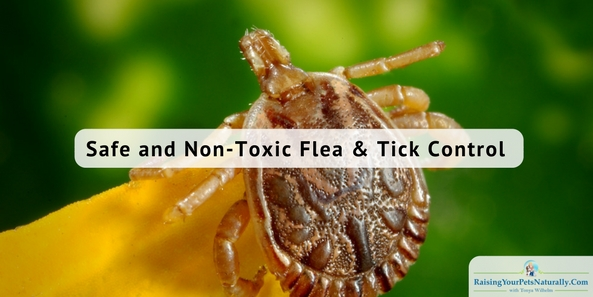 Best Natural Flea and Tick Treatment for Dogs. No need for harsh and potentially fatal flea products, here are some natural solutions. #raisingyourpetsnaturally