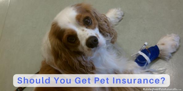 Pet Insurance, Dog Insurance, Cat Insurance | Is Pet Insurance Worth It?