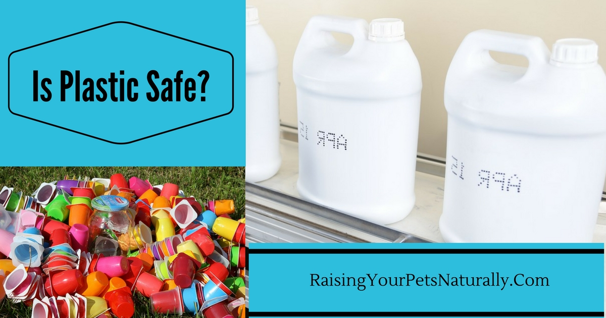 Is it Safe for pets to Eat and Drink out of Plastic? BPA-Free is it really safe? #raisingyourpetsnaturally