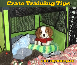 Crate Training Tips