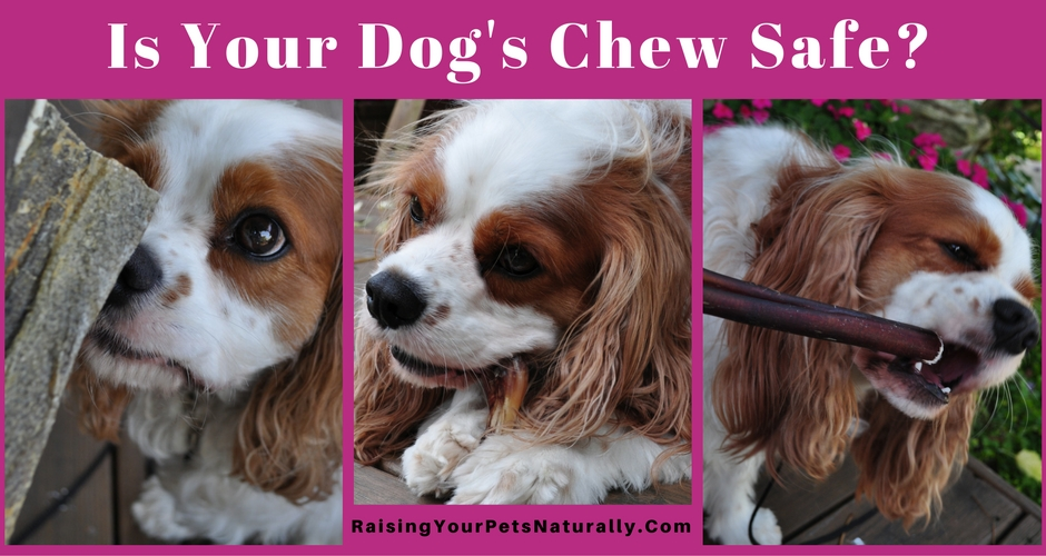 What you need to know about dog bones. Learn how to spot safe and healthy dog chews and bones. #raisingyourpetsnaturally