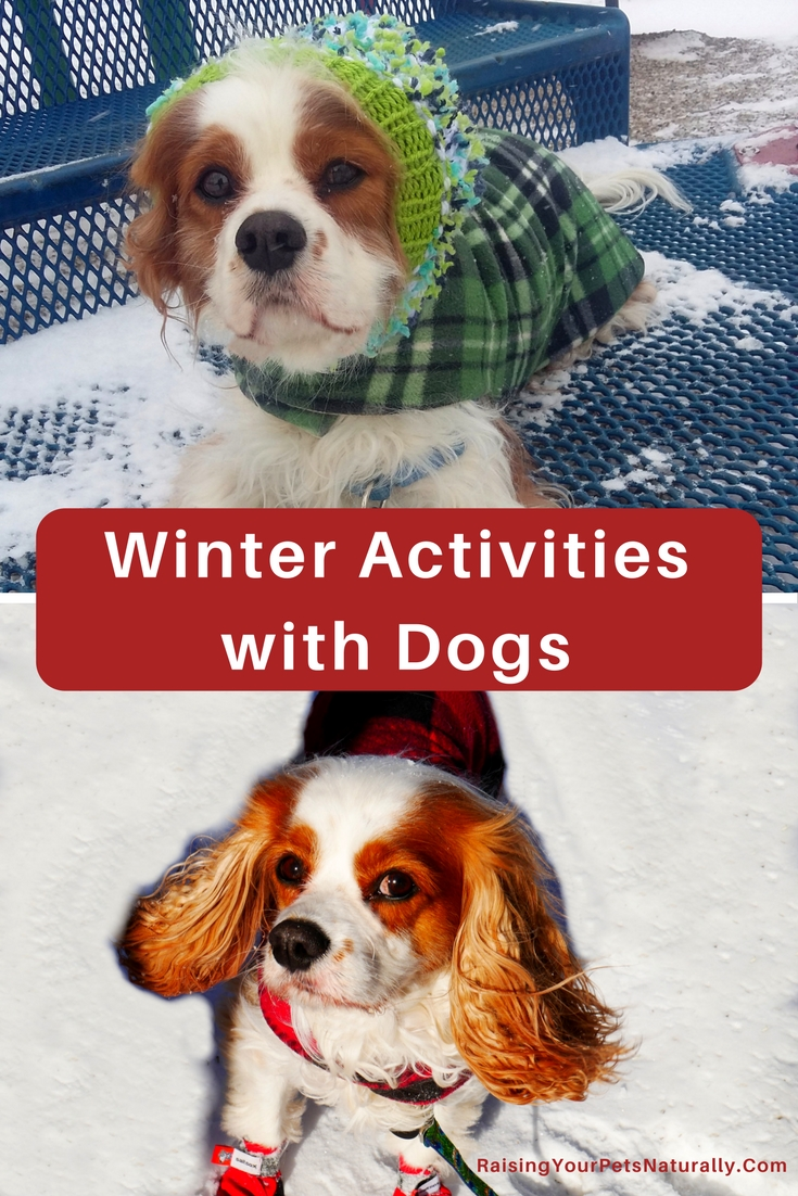 Outdoor fun with your dog: During winter, don't miss those days that are actually sunny! Although the weather still may be cold, it feels great to get a little vitamin D from the sun. Keep safety in mind, but sunny days are a nice time to get outside with your dog. Below are a few games you might be able to play with your dog.