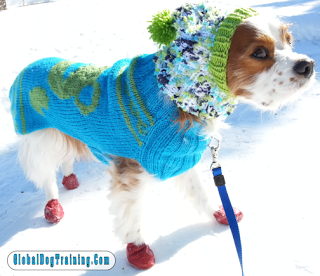 Winter Activities With Dogs