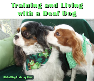 Training A Deaf Dogs