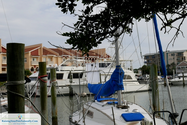 Changing Tides Florida dog-friendly review