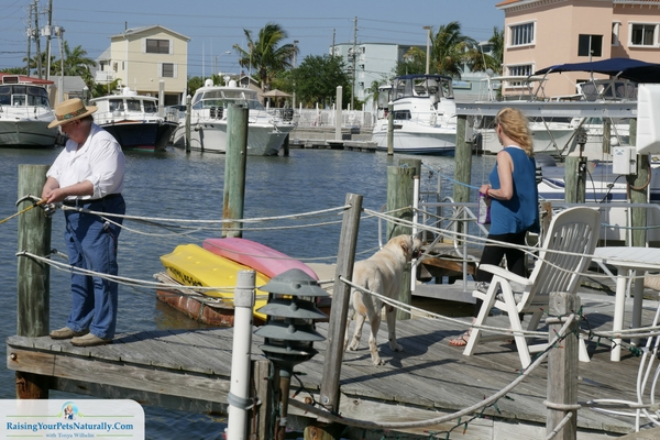 Dog-friendly fishing charters in florida