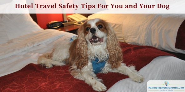 I've talked with people who are afraid to travel. Please don't let these stories stop you from taking a vacation with your dog. Hotel safety for you and your dog. #raisingyourpetsnaturally