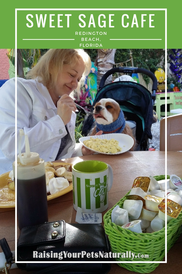 Dog-friendly vacations in Florida. Dog-friendly restaurants in North Redington Beach, Florida.  The Sweet Sage Care is an amazing dog-friendly cafe. #raisingyourpetsnaturally #dogfriendlycafes #dogfriendlytravel #dogfriendlyvacations