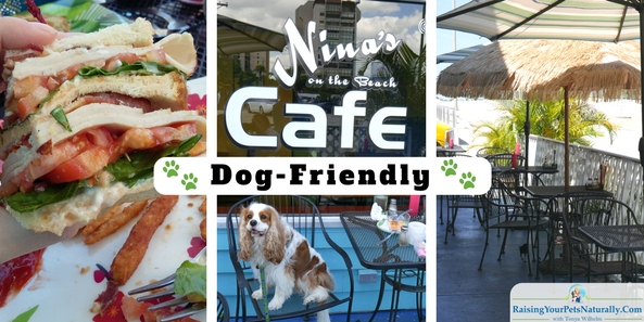 Dog-friendly vacations in Florida. Dog-friendly restaurants in St. Pete Beach, Florida. Nina's on the Beach Cafe in St. Pete is a wonderful dog-friendly cafe. #raisingyourpetsnaturally