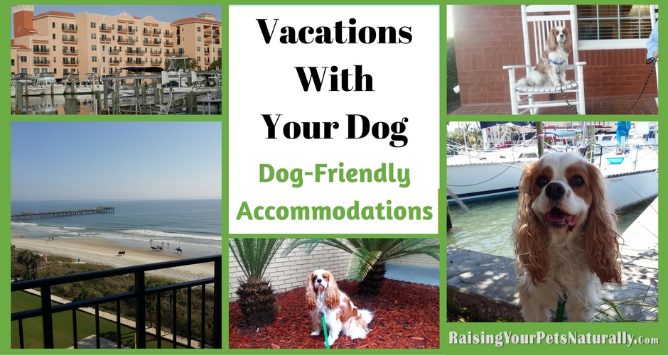 Dog-friendly hotels, cabins, rental homes and resorts. If you are traveling with dogs, you won't want to miss these pet-friendly accommodations. #raisingyourpetsnaturally