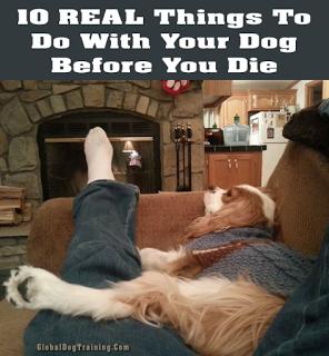Dog adventures and bucket list