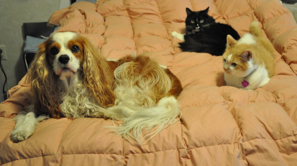 Natural Care For Pets