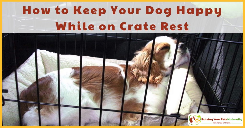 Learn how to keep your dog busy and entertained while he's on crate rest. Here are a few ideas to help you and your dog while on crate rest. #raisingyourpetsnaturally