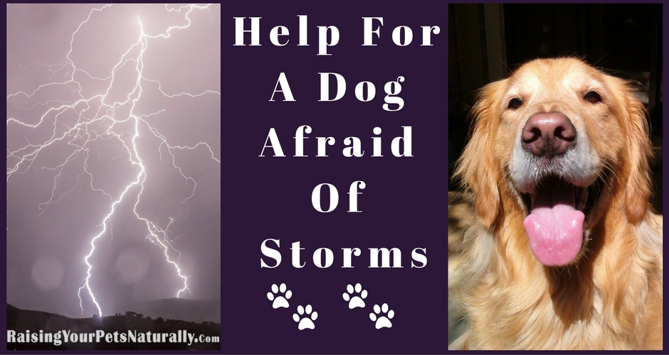 why are dogs afraid of thunder and how to help a scared dog
