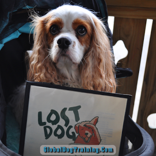 Lost Dog Cafe