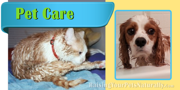 Natural and Holistic Dog Care, Cat Care and Pet Care. Healthy and natural pet care articles, videos and tips. #raisingyourpetsnaturally