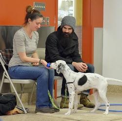 Perrysburg Dog Training