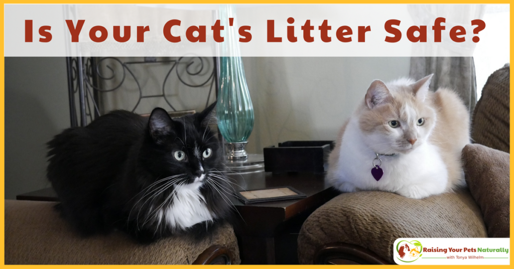 Is your cat litter safe or toxic? If you are looking for the best natural cat litter, you'll want to read this article. #raisingyourpetsnaturally