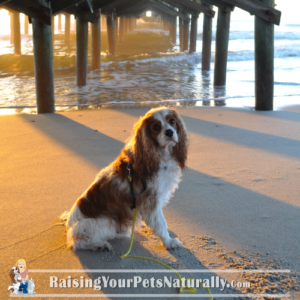 Dog friendly south carolina beaches