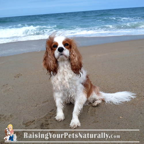 Dog friendly outer banks