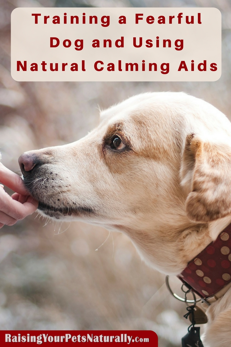 Training a Fearful Dog and Using Natural Calming Aids. Learn how to successfully use natural calming aids to assist in your fearful dog's training program. #raisingyourpetsnaturally