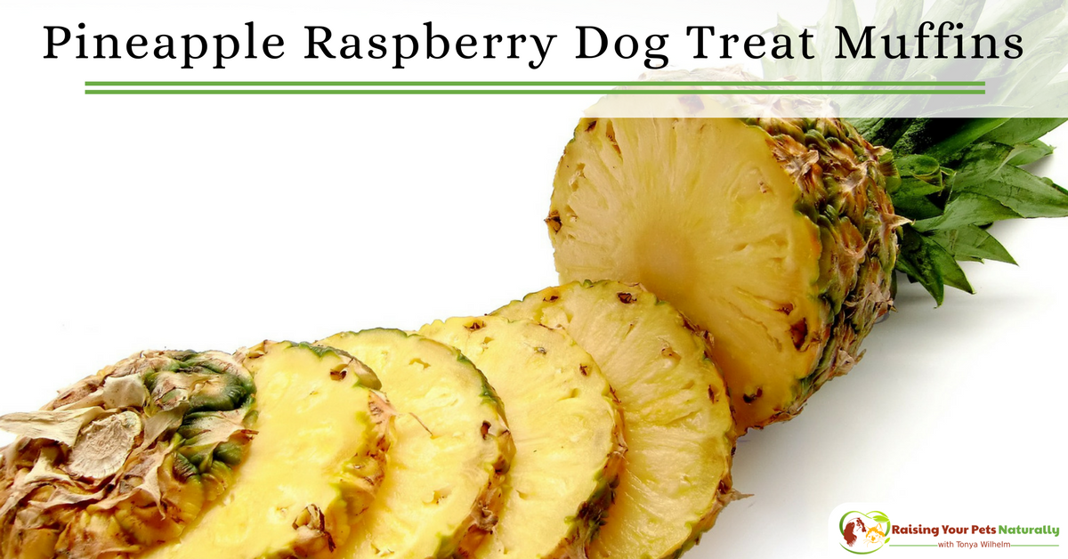 Healthy and Homemade Dog Treat Recipes | Pineapple and raspberry dog treat muffins for dogs. DIY video. #raisingyourpetsnaturally