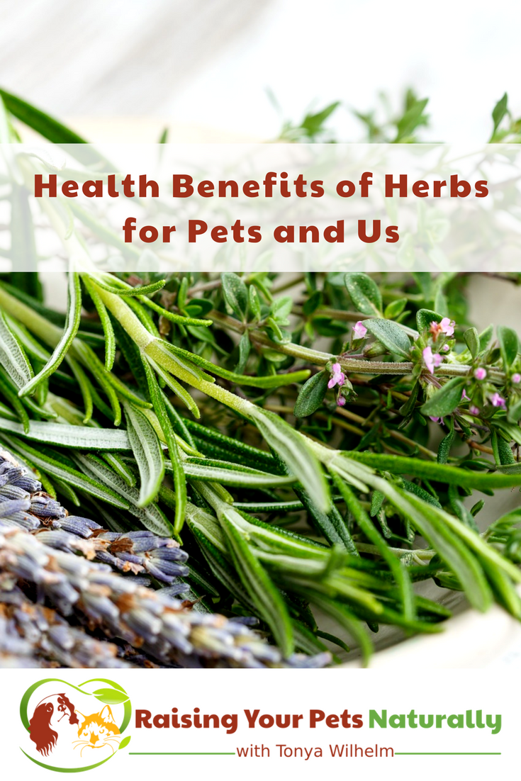 Herbs for Dogs, Herbs for Cats and Herbs for Us. Learn about Chinese herbs for dogs, calming herbs for cats and so much more. #raisingyourpetsnaturally