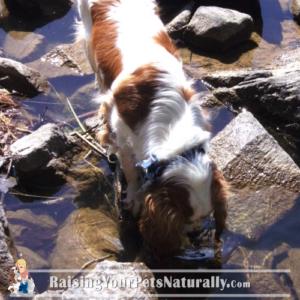 Dogs at a Lake
