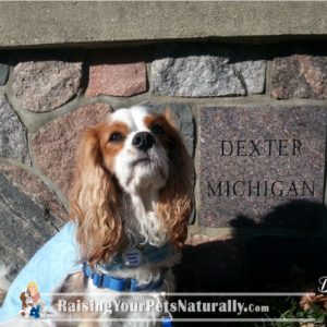 Dog-Friendly DEXTER Michigan