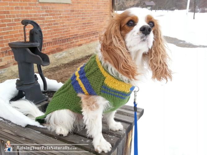 MeekByDesign Custom Dog Sweaters