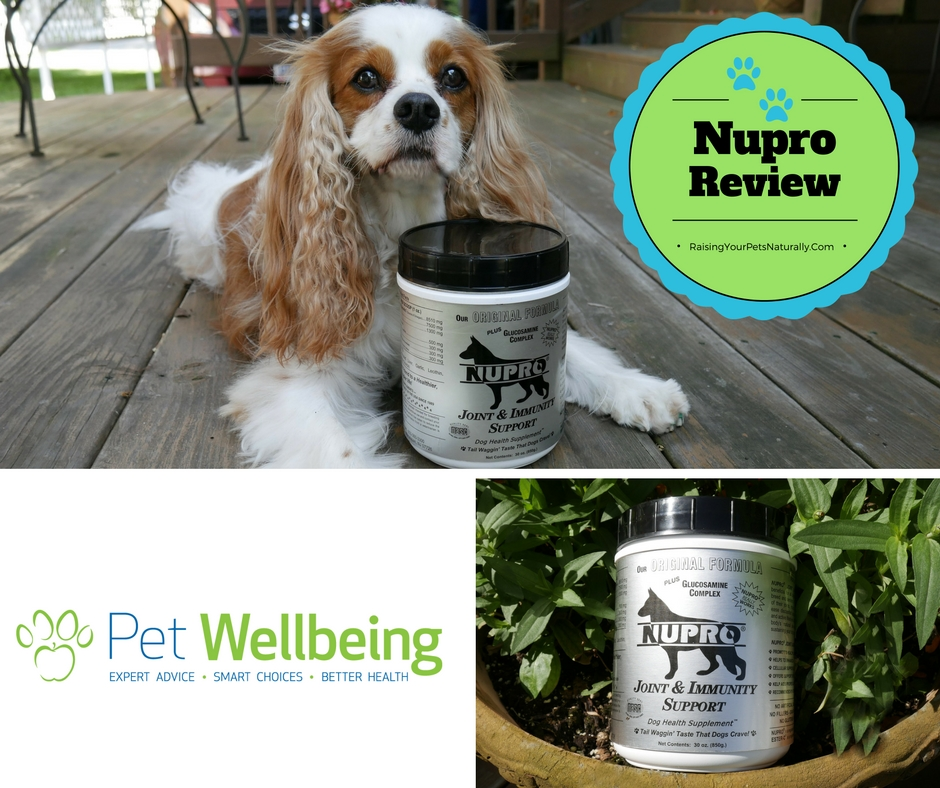 Nupro Joint & Immunity Support for Dogs Review.  A natural joint support supplement for dogs is a must. #raisingyourpetsnaturally