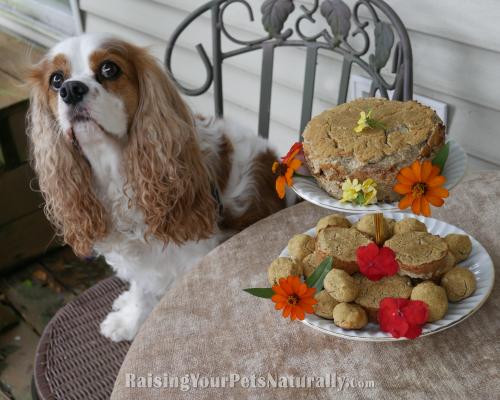 Healthy Dog Cake Recipe