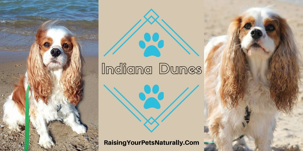 Dog-friendly Indiana Dunes and dog friendly Indiana vacations.