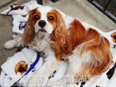 Dog-Friendly Cheddar's Restaurant