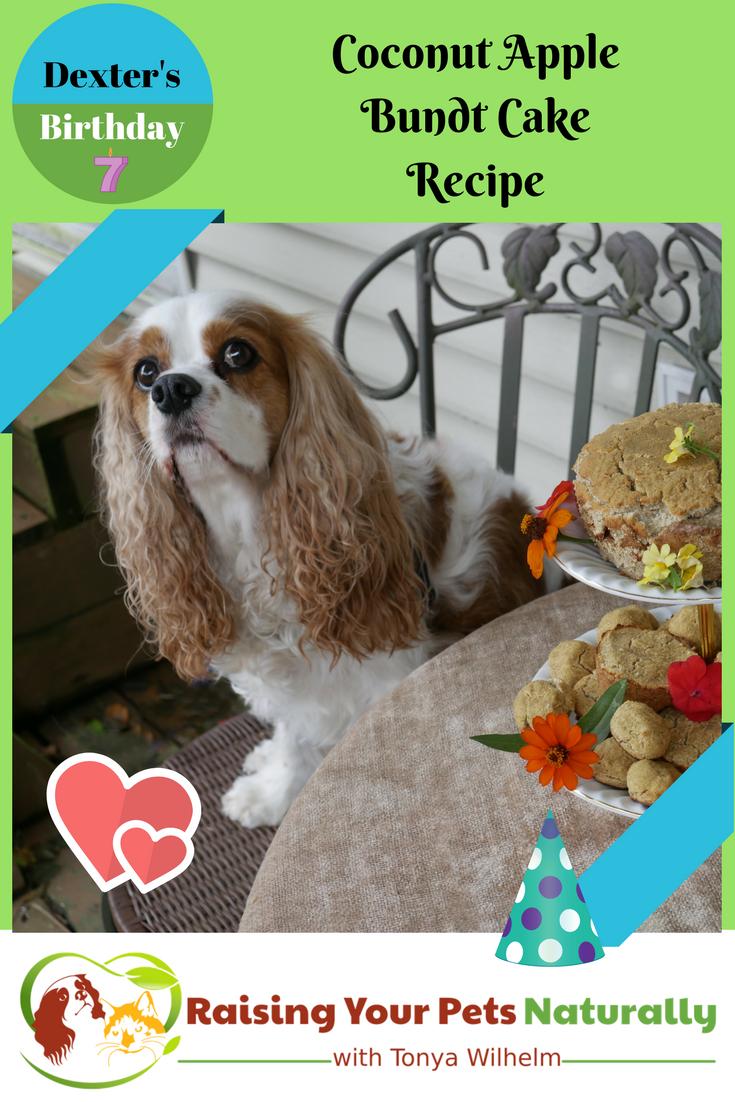 Healthy Homemade Dog Birthday Cake Recipe. Learn how to make a cake for your dog! #raisingyourpetsnaturally #dogbirthdaycake #dogbirthdaycakerecipe #dogcake #dogcakerecipe #puppycake