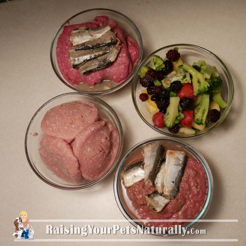 Healthy and natural cat food recipes