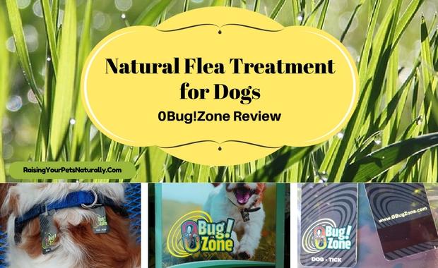 0Bug!Zone Natural Flea Treatment Review