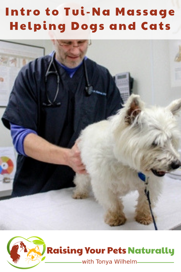 Holistic and Natural Veterinary Care | An Intro to Tui-Na Massage Helping Dogs and Cats