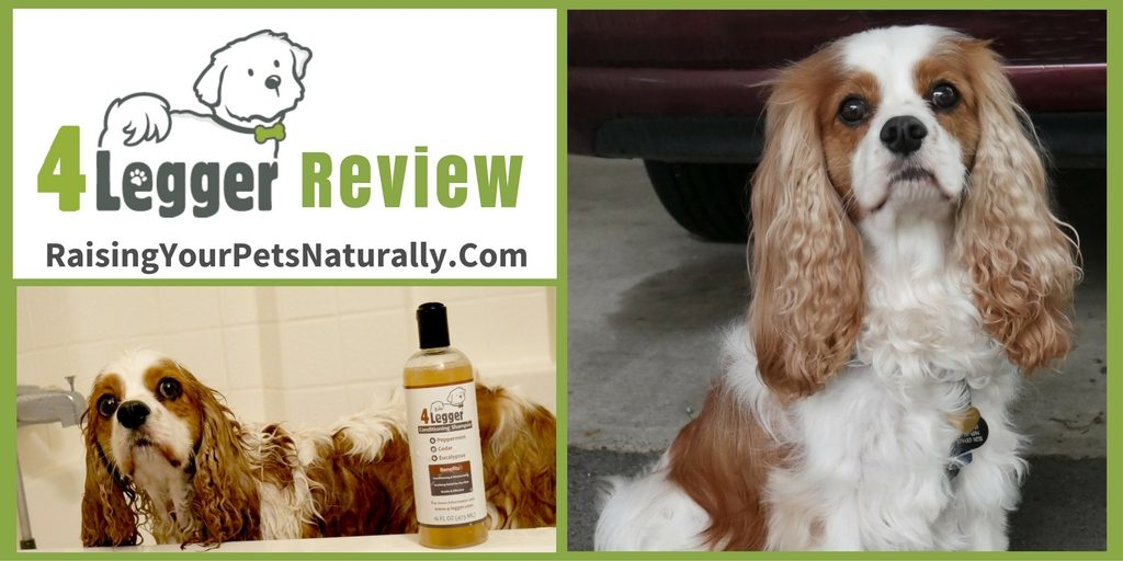 4-Legger Dog Shampoo Review. When I'm looking for a natural dog shampoo, the first thing I do is flip over the dog shampoo bottle and read the entire ingredient panel. I avoid a long list of ingredients
