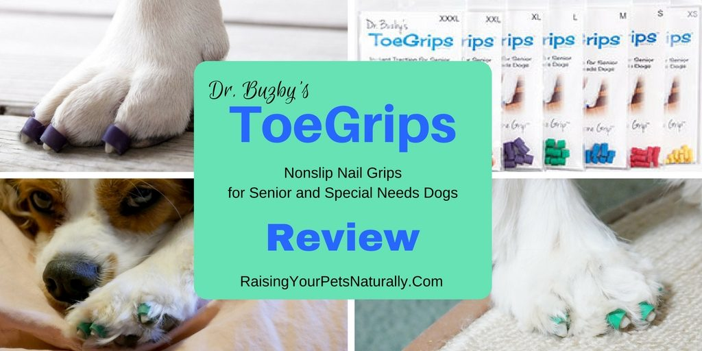 "Dr. Morgan and I thought that ToeGrips might benefit Dexter in helping him ""grab"" walking surfaces, so I contacted Dr. Julie Buzby, the founder of ToeGrips, to see if we could try them and provide a review. Dr. Buzby was more than happy to allow Dexter and me to try a set, to see if they would provide proprioceptive stimulus and help Dexter to pick up his feet."