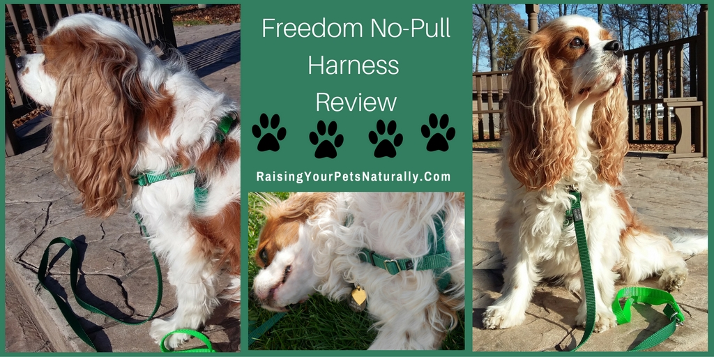 Dog Harness Review: Freedom No-Pull Dog Harness. Check out one of my favorite dog harnesses for walking a dog and teaching a dog not to pull on the leash.
