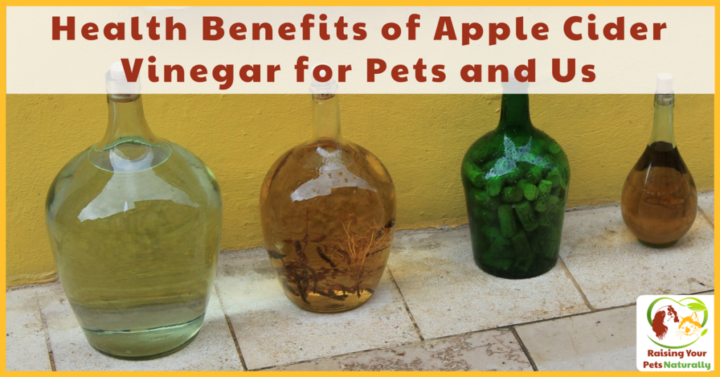 Health benefits of apple cider vinegar for dogs and pets. Natural itch spray, first aid treatments, flea control, yeast control, digestion and more. #raisingyourpetsnaturally