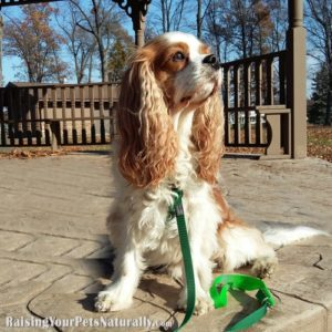 Front Clipping Dog Harness